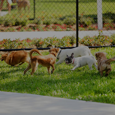Large Dog Park at Park on 14th Apartments